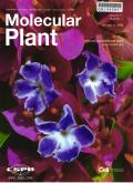 分子植物(英文版)
